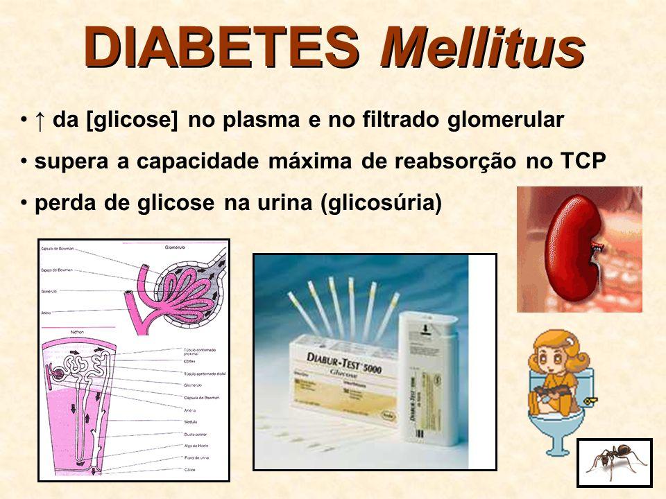 DIABETES Mellitus ↑ da [glicose] no plasma e no filtrado glomerular